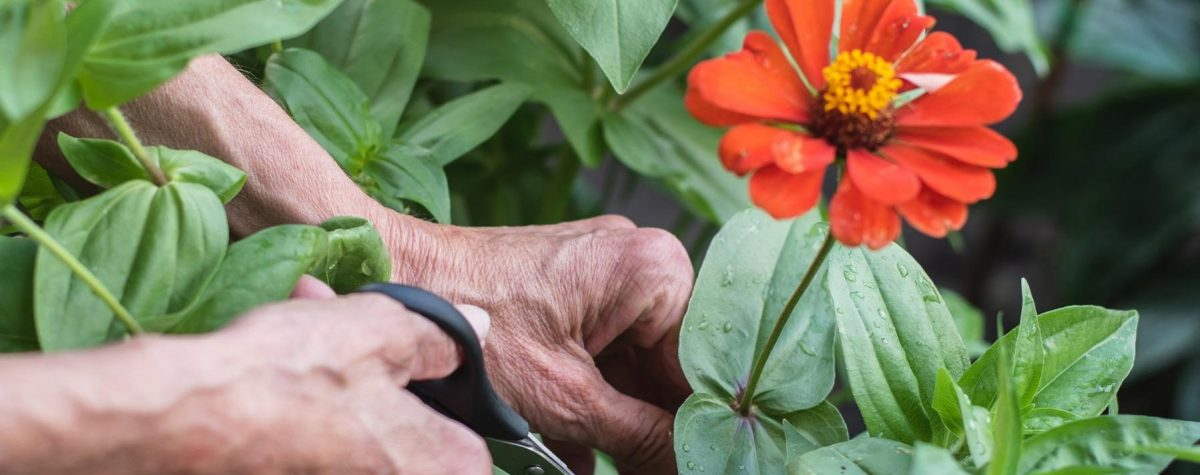 The New Orleans Town Gardeners