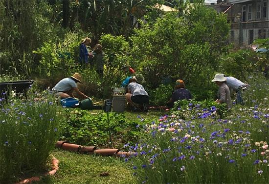 Summertime in the Edible Schoolyard