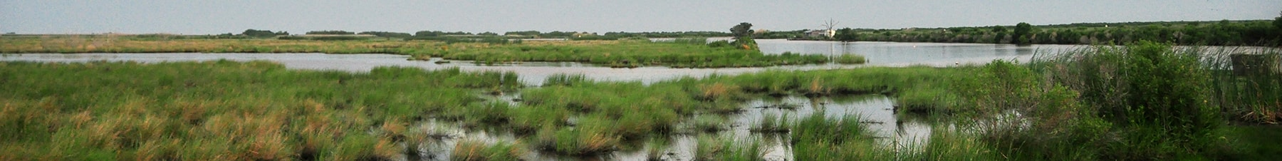 Louisiana coastal wetlands